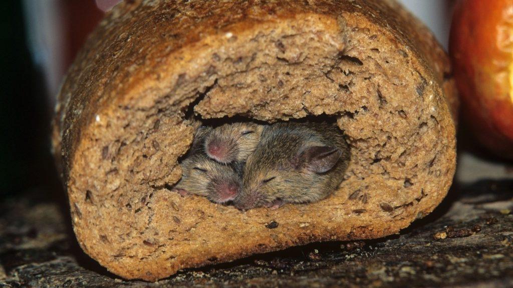 Порча продуктов грызуны в Набережных Челнах